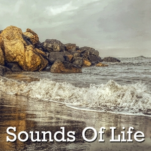 Sounds Of Life   Healing Sounds for Deep Sleep and Relaxation