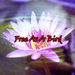 Free As A Bird | Spa Music Paradise