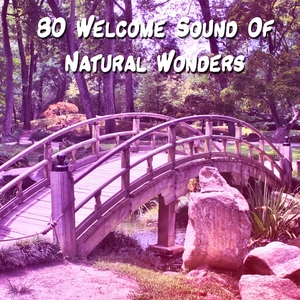 80 Welcome Sound Of Natural Wonders | Healing Sounds for Deep Sleep and Relaxation