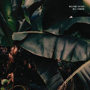 Shimmer | Will Samson