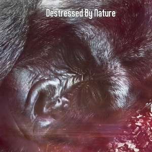 Destressed By Nature | Musica para Dormir Dream House