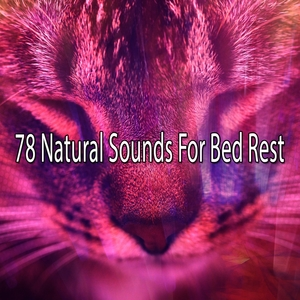 78 Natural Sounds For Bed Rest | Sounds of Nature