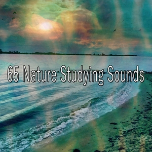 65 Nature Studying Sounds | Classical Study Music