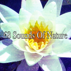 68 Sounds Of Nature | Forest Sounds
