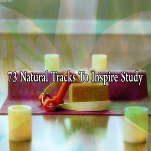 73 Natural Tracks To Inspire Study | Classical Study Music