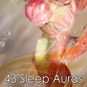 43 Sleep Auras | Dormir