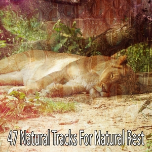 47 Natural Tracks For Natural Rest | White Noise Babies