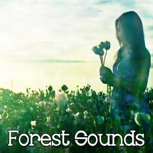 43 Sounds For A Quiet Night Meditation | Forest Sounds