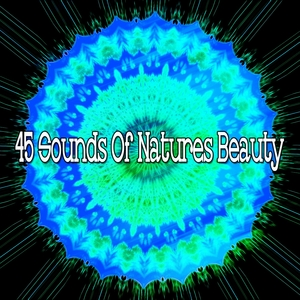 45 Sounds Of Natures Beauty | Forest Sounds