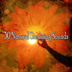 30 Natural Studying Sounds | Music For Reading