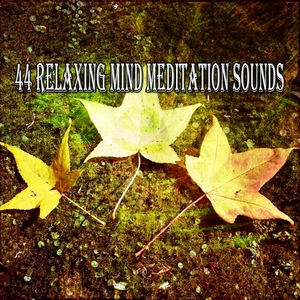 44 Relaxing Mind Meditation Sounds | Musica Relajante