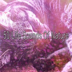 51 Life Sounds Of Nature | Sounds of Nature