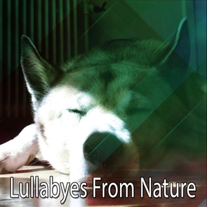 Lullabyes From Nature | Musica para Dormir Dream House