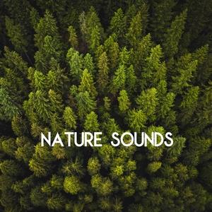 Nature Sounds - Sleep and Relaxation | Nature Sounds Sleep Music Baby Sleep