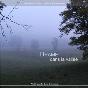 Brame dans la vallée | Fernand Deroussen
