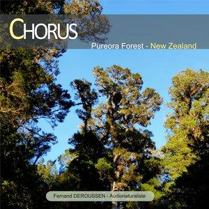 Chorus: Pureora Forest (New Zealand) | Fernand Deroussen