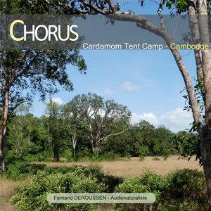 Chorus: Cardamom Tent Camp (Cambodge) | Fernand Deroussen