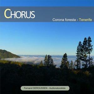 Chorus: Corona Forest (Tenerife) | Fernand Deroussen