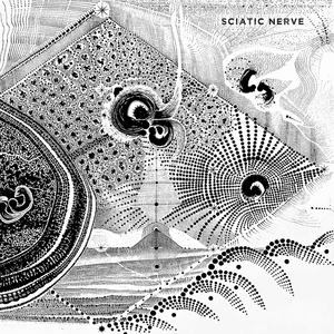 Sciatic Nerve | Sciatic Nerve