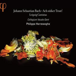 Bach: Ach süßer Trost! | Philippe Herreweghe