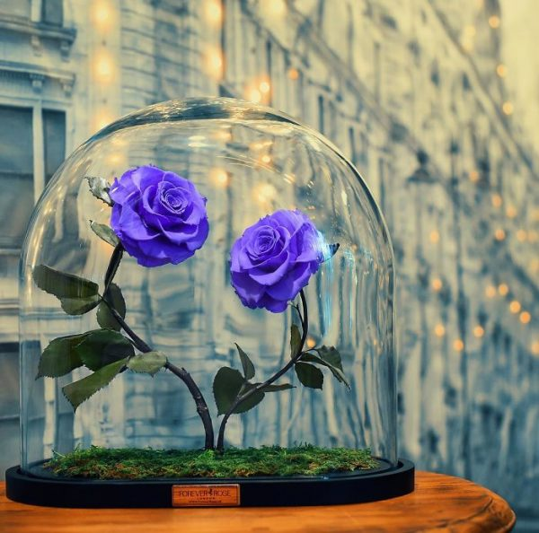 Real Beauty And The Beast Rose Allegedly Lasts Forever Without