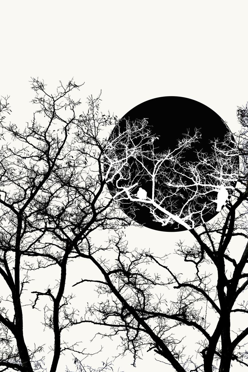 Illustration Forest