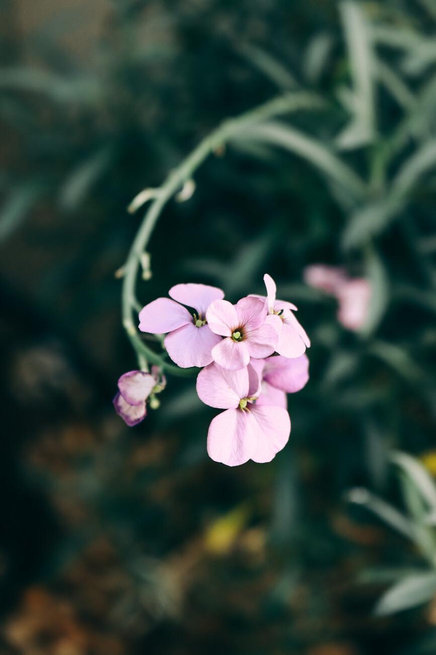 Umetniška fotografija Purple flower 2