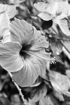 Kunstfotografie Black flower