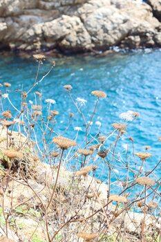 Art Photography Blue bay