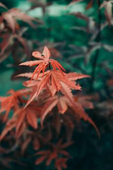 Art Photography Autumn leaves