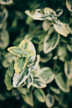 Nature 2 Fototapet