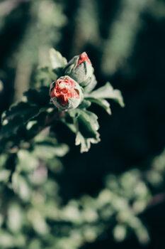 Nature 3 Fototapet