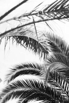 Kunstfotografie Palm leaves 2