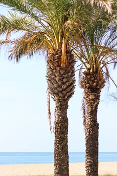 Palms Fototapet