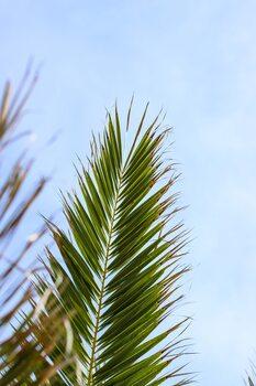 Palm leaves 1 Fototapet