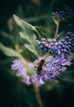 Purple flower with bee Fototapet