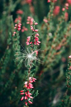 Pink flower 2 Fototapet
