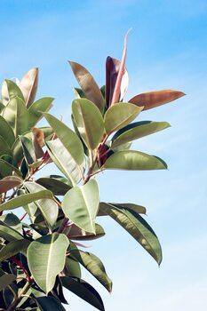 Tropical leaves Fototapet