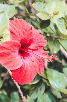 Red flower Fototapet