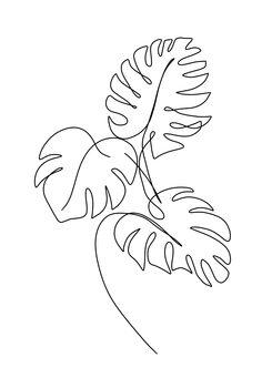 Ilustracija Monsteras leafs