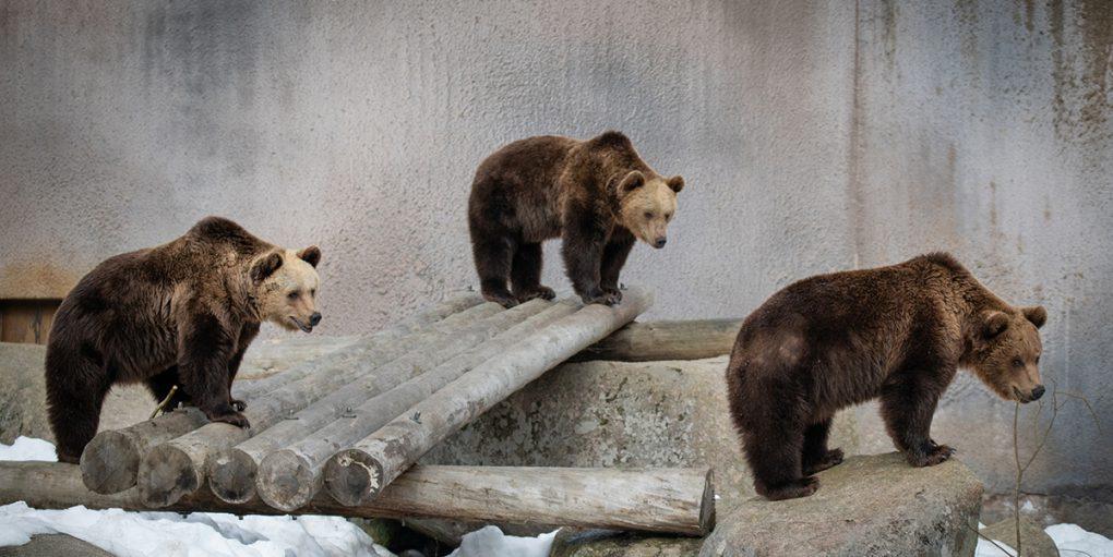 Ähtärin eläinpuisto karhut