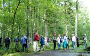 Tourist group in Bialowieza National Park