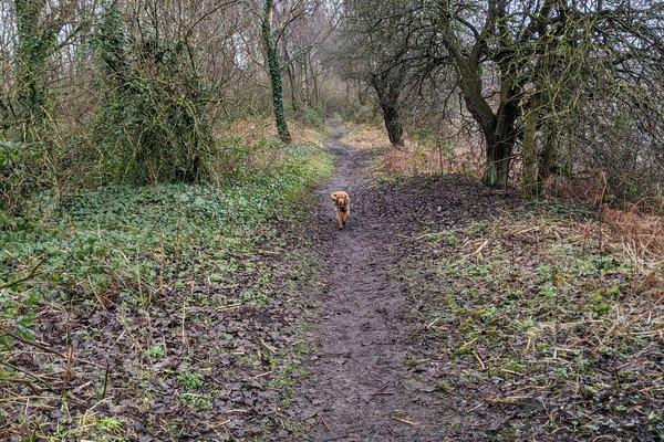 Siding Lane Nature Reserve