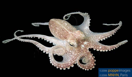 Image Result For Octopus Pipe