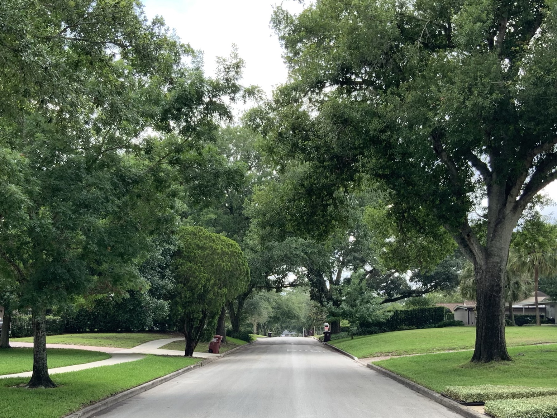 What Does a Tree Lined Street, Drive or Avenue Mean to You?