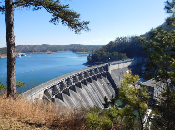 What's Lurking in Lake Allatoona?