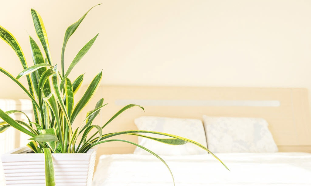 Air Purifying Houseplants, Yes!