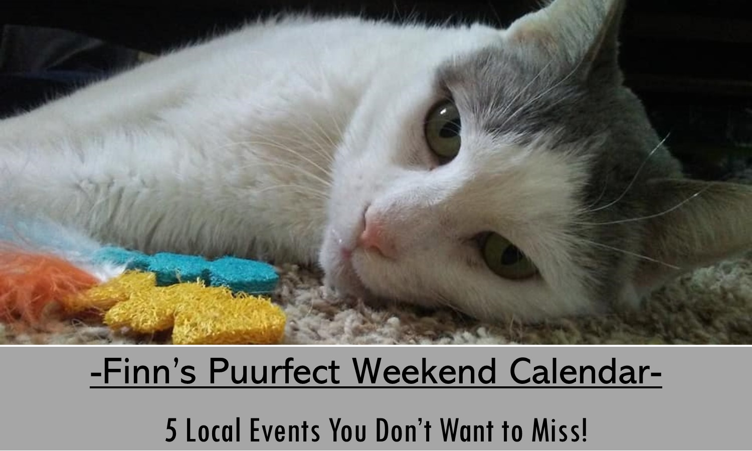 5 Don't Miss Events this Weekend!