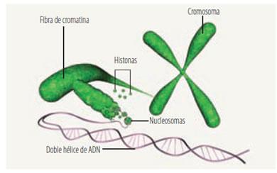 acidos_nucleicos_10.jpg (390×244)
