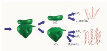 acidos_nucleicos_15.jpg (378×182)